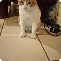 Adopt A Pet :: Brozo - San Diego, CA