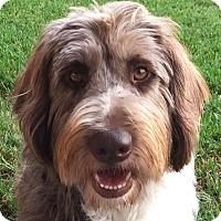 Adopt A Pet :: Kelsi - Orlando, FL