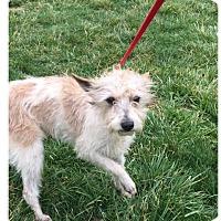 Adopt A Pet :: Wynn - Baltimore, MD