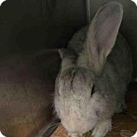 Adopt A Pet :: TUESDAY - Brooklyn, NY