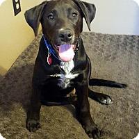 Adopt A Pet :: Nashville - Malakoff, TX