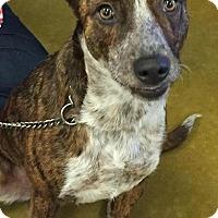 Adopt A Pet :: Vanna - Orlando, FL