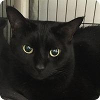 Adopt A Pet :: Middy - Lafayette, NJ