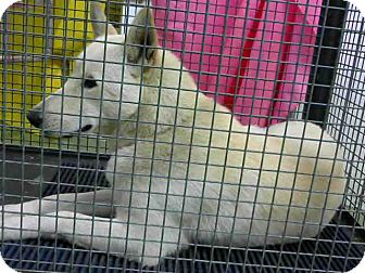 Shepherd (Unknown Type) Mix Dog for adoption in San Bernardino, California - URGENT on 4/21 @DEVORE