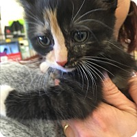 Adopt A Pet :: Cali - Tracy, CA
