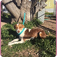 Adopt A Pet :: June - DeForest, WI