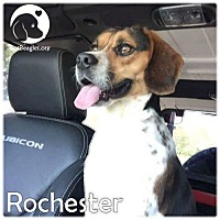 Adopt A Pet :: Rochester - Pittsburgh, PA