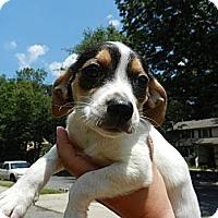 Adopt A Pet :: Fiona - South Jersey, NJ