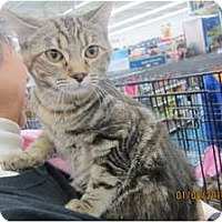 Adopt A Pet :: Thelma - Sterling Hgts, MI