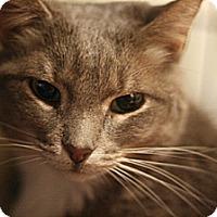 Adopt A Pet :: Mo Mo and Ray Ray - Columbia, MD