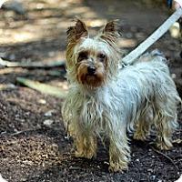 Adopt A Pet :: Ginger - Tinton Falls, NJ