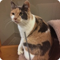 Adopt A Pet :: Catherine - Byron Center, MI