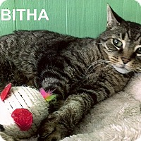 Adopt A Pet :: Tabitha - Medway, MA