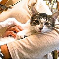 Adopt A Pet :: Benjamin Junior - Davis, CA