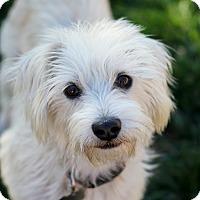 Adopt A Pet :: Sidney - Watch my video! - Yorba Linda, CA