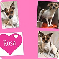 Adopt A Pet :: ROSA - Plano, TX