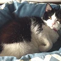 Adopt A Pet :: Trudy - Algonquin, IL