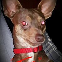 Adopt A Pet :: Taz - Buckeye, AZ