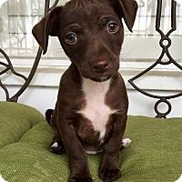 Adopt A Pet :: Rio (BH) - Santa Ana, CA