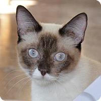 Adopt A Pet :: Sia - Glendale, AZ