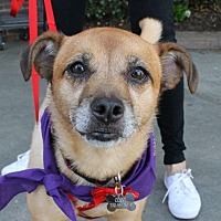 Adopt A Pet :: Coco - Winder, GA