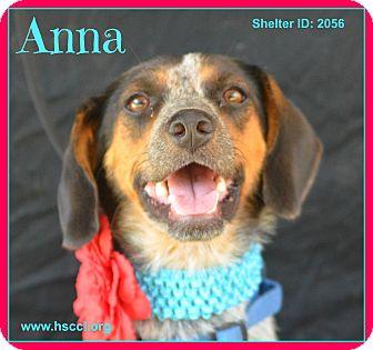 Beagle Mix Dog for adoption in Plano, Texas - Anna