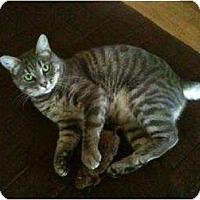Adopt A Pet :: Nina - Tustin, CA