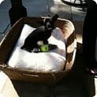 Adopt A Pet :: Dallas - Modesto, CA