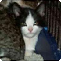Adopt A Pet :: Bubba - Sierra Vista, AZ
