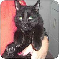 Adopt A Pet :: Jonas - Phoenix, AZ