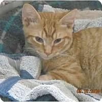 Adopt A Pet :: Marmalade - Riverside, RI