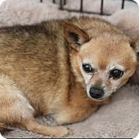 Adopt A Pet :: Nancy - Creston, CA