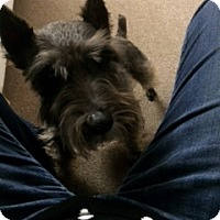 Adopt A Pet :: Josie - Laurel, MD