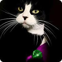 Adopt A Pet :: Bon Bon - Lunenburg, MA