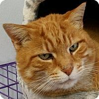Adopt A Pet :: Morris - Lexington, KY