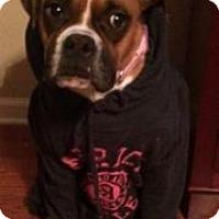 Adopt A Pet :: Brandi CC - Providence, RI