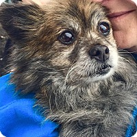 Adopt A Pet :: Reese - Bucks County, PA