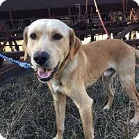 Adopt A Pet :: Finn III - Westminster, MD
