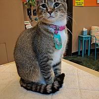 Adopt A Pet :: Kiko - The Colony, TX