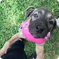 Adopt A Pet :: Sansa - Houston, TX