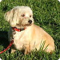 Adopt A Pet :: Snuggles - Somerset, KY