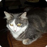 Adopt A Pet :: Brieland - Baltimore, MD