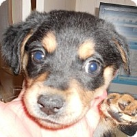 Adopt A Pet :: Leah - Raleigh, NC