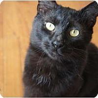 Adopt A Pet :: Mondo - Xenia, OH