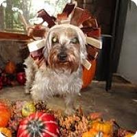 Adopt A Pet :: Teak - Suwanee, GA