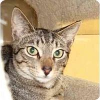 Adopt A Pet :: Tyber - Fort Lauderdale, FL