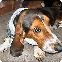 Adopt A Pet :: Romeo - Phoenix, AZ