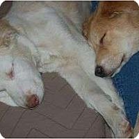 Adopt A Pet :: Sandi - Denver, CO