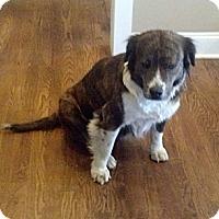 Adopt A Pet :: Nana - nashville, TN