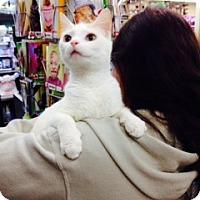 Adopt A Pet :: Kumquat - Troy, OH